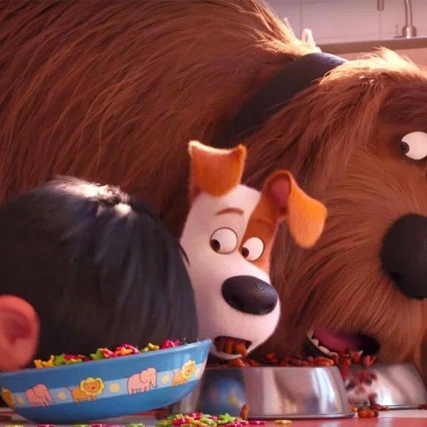 Secret Life of Pets 2 trailer unleashes crazed primates, complex emotions